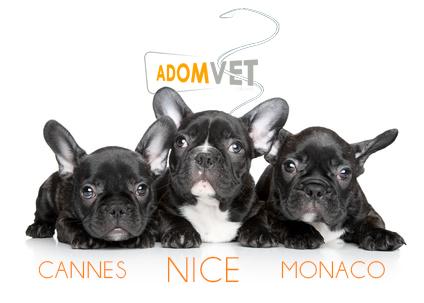 Urgences Vétérinaires de Garde sur Nice, Cannes et Monaco - Alpes-Maritimes (06)
